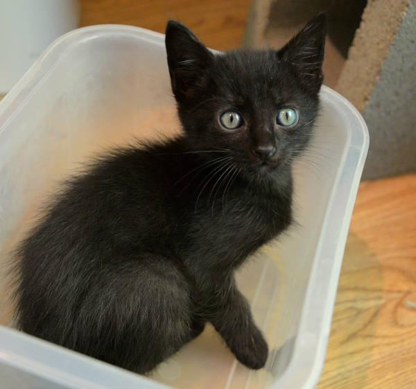 Harvey Rescue Kitties